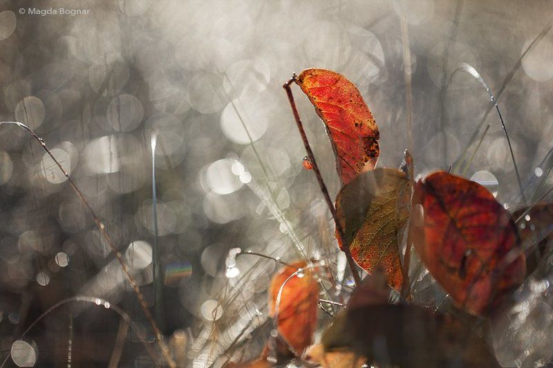 Diamond Autumnphoto preview