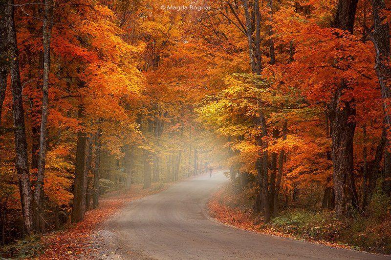 Autumn Walkphoto preview