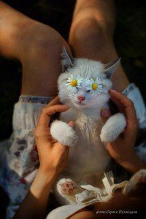 Солнечный сон доброго Кота