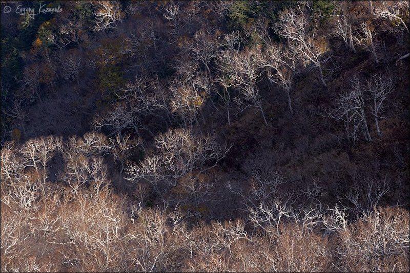 Гора острая, Каменная береза, Осень, Сахалин Облетелиphoto preview