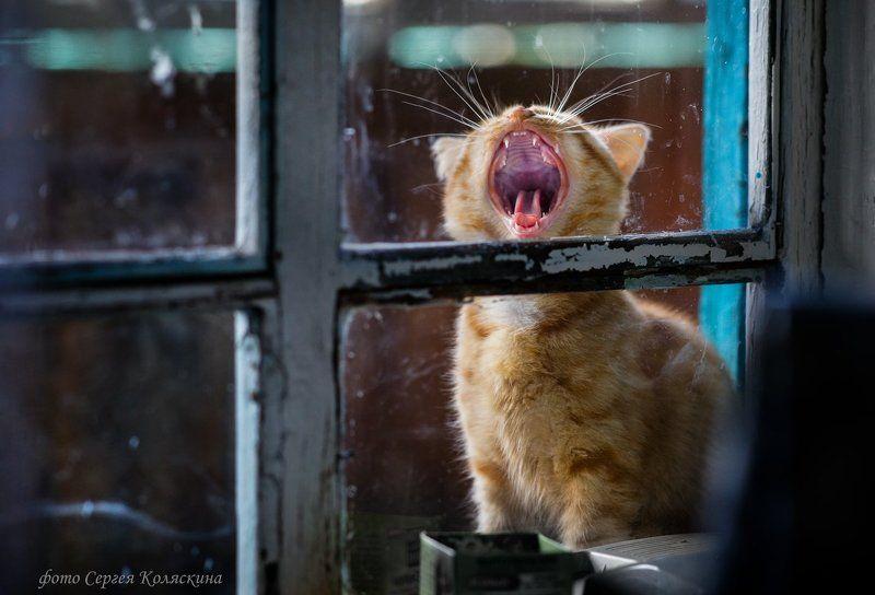 Доброе утро, Кот, Котенок, Котёнок, Котик, Коты, Окно, Окошко, Рыжий, Рыжий кот, Сергей коляскин серия \