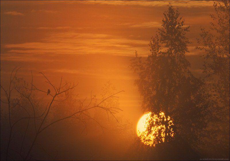 Встречая рассвет.photo preview