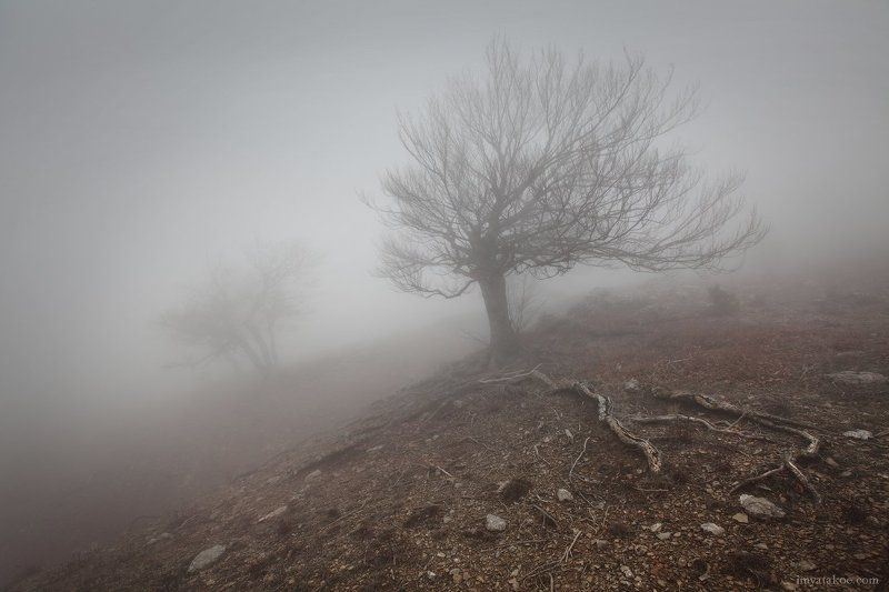 Крым, Туман, Чигинитра нехорошая погодаphoto preview