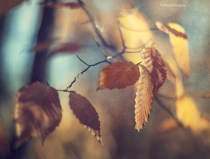Golden Autumnphoto preview