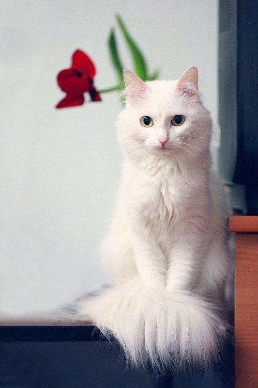 кошка ^.^photo preview
