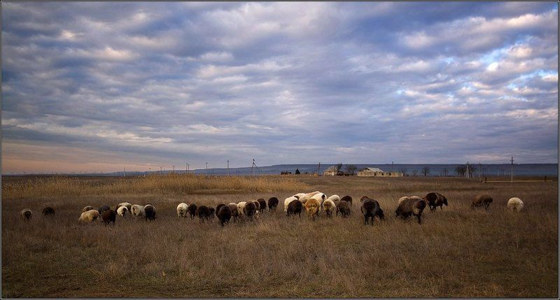 отара овец или вечер,возвращение домой..photo preview