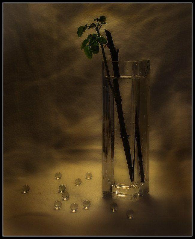 Жизнь в стекле...photo preview