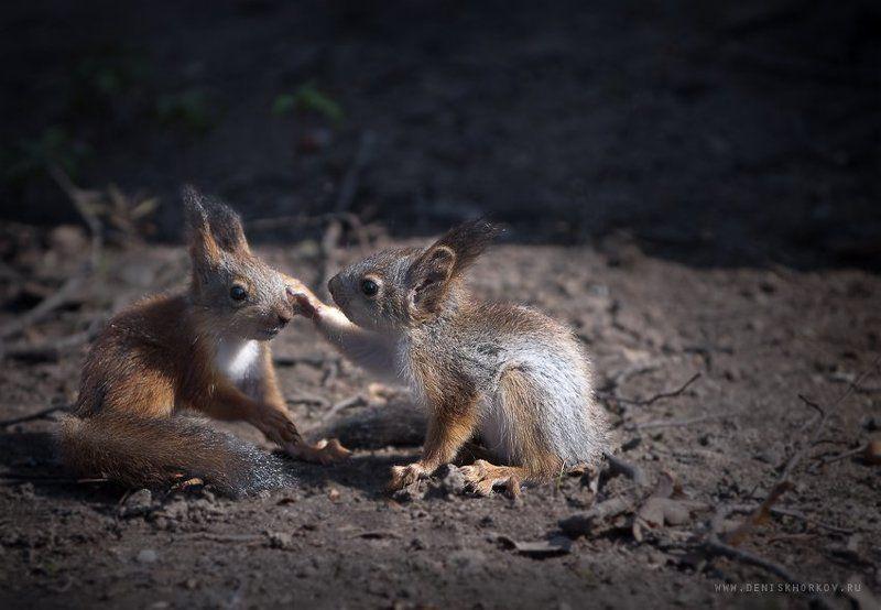 Иди сюда, щас целовать буду!photo preview