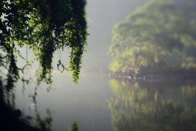 Mahaweli, River, Sri-Lanka, Махавели, Пейзаж, Природа, Река, Утро, Шри-ланка ***photo preview