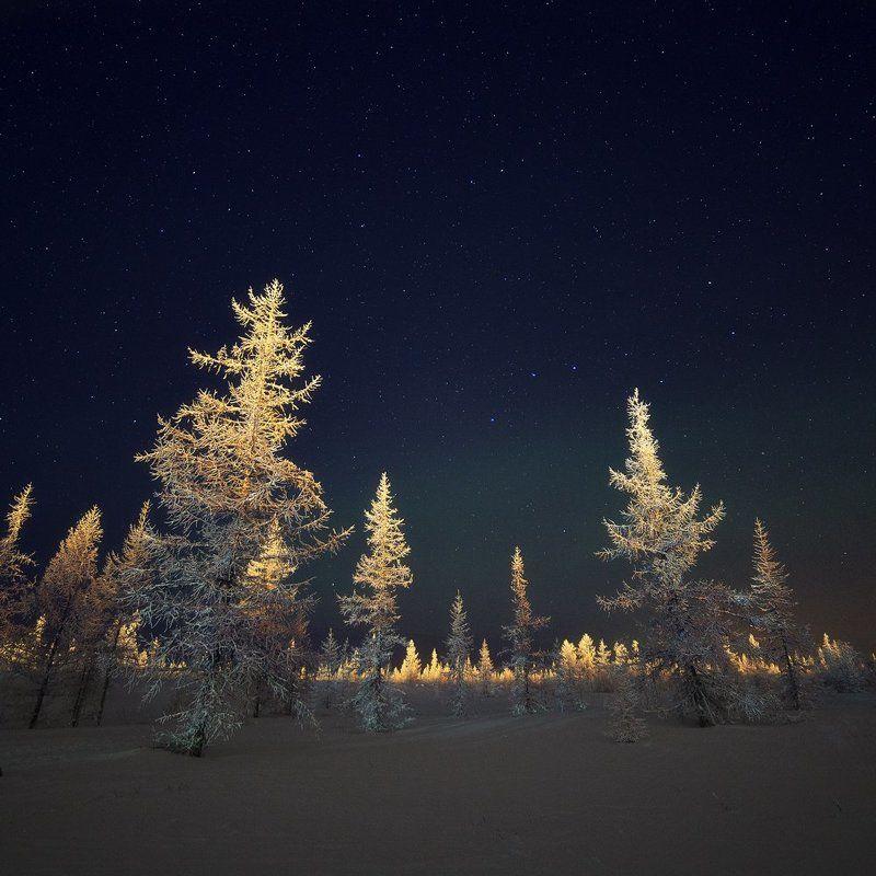 зима, лес, лесотундра, новыйуренгой, ночь, тундра, уренгой, ямал, янао Сторожилы тундры фото превью