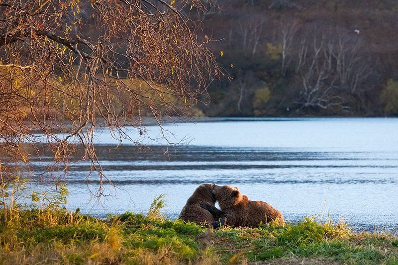 Wildlife, Камчатка, Курильское озеро Love storyphoto preview