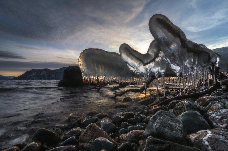 Алтай, Алтайский заповедник, Телецкое озеро Льды Телецкого озера.photo preview