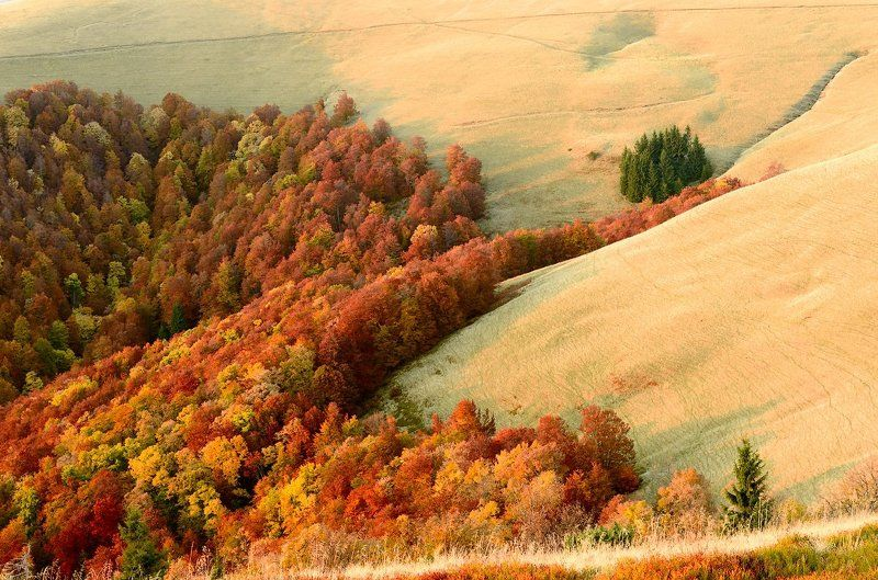 Autumn, Beech, Forest, Grass, Karpaty, Landscape, Mountains, Pine, Trees, Горы, Деревья, Капрати, Лес, Осень, Пейзаж, Сосны, Трава photo preview