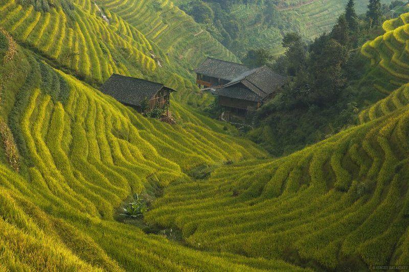 China, Китай, Рис, Рисовые террасы Жизнь в плюшевой долине.photo preview