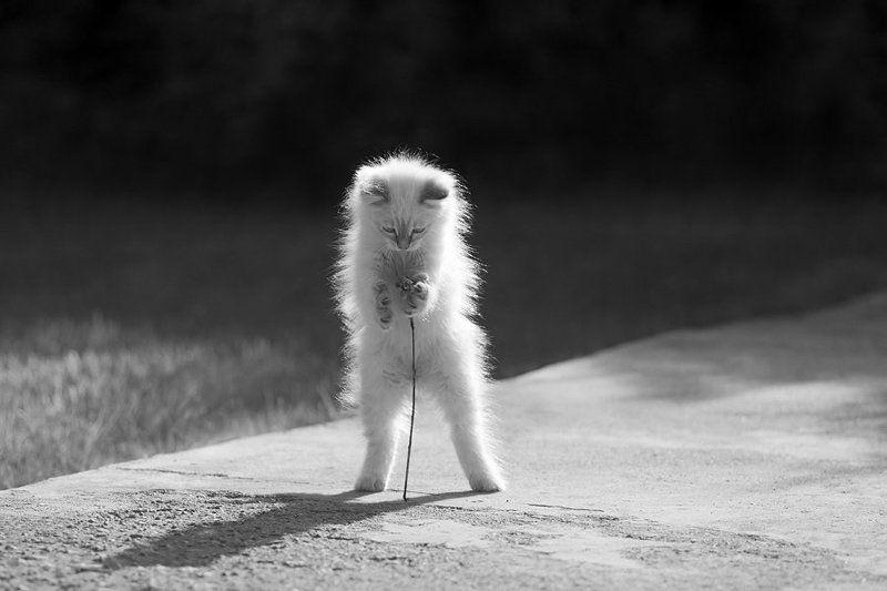 кошки Про белую кошку-2photo preview