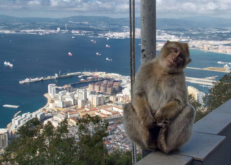 Gibraltarphoto preview