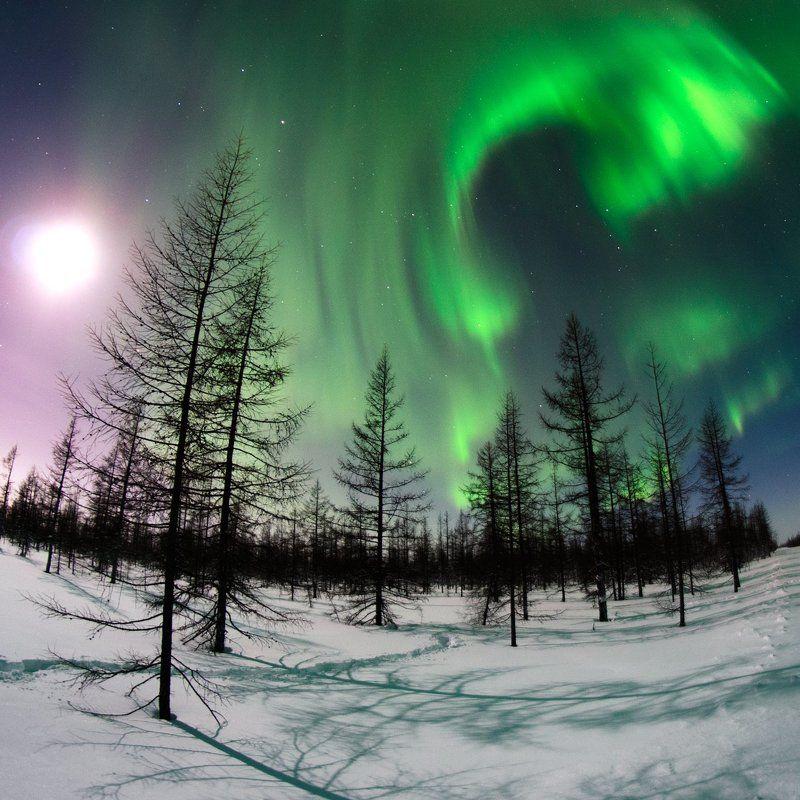 Aurora, Aurora borealis, Зима, новыйуренгой, Полярноесиение, Северноесияние, Сияние, Уренгой Луна и сияние фото превью