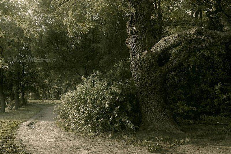 парк, лес, природа, пейзаж, дуб, дерево Asylumphoto preview