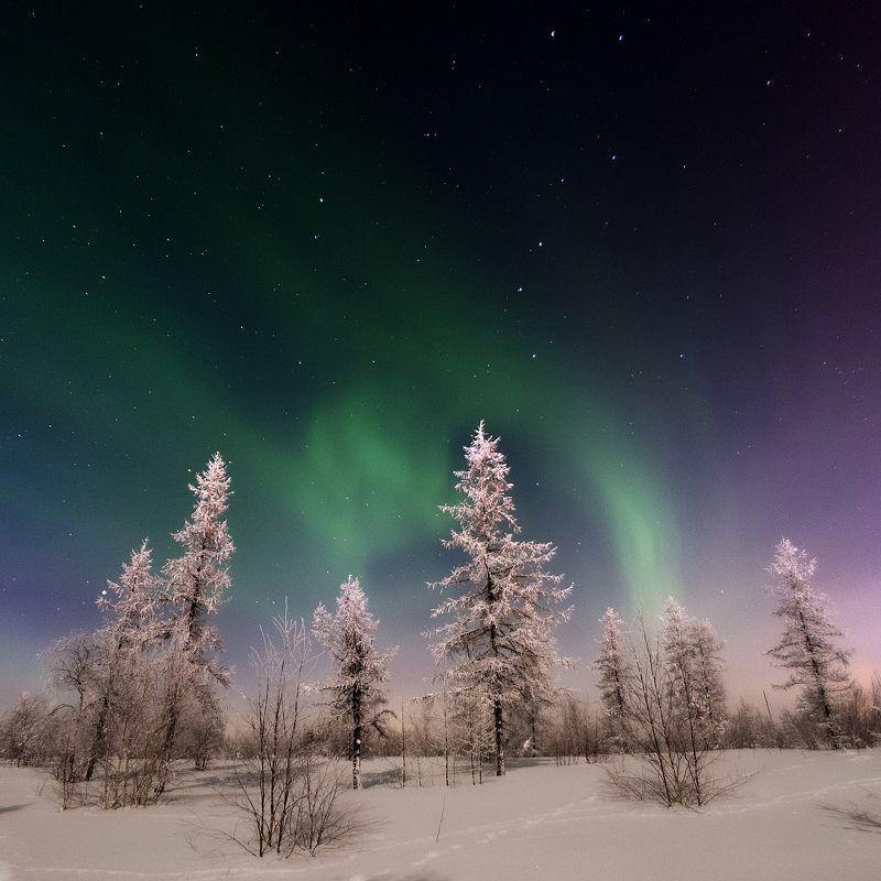 aurora, aurora borealis, зима, лес, новыйуренгой, северноесияние, сибирь, тундра, уренгой, ямал Сказка севера фото превью