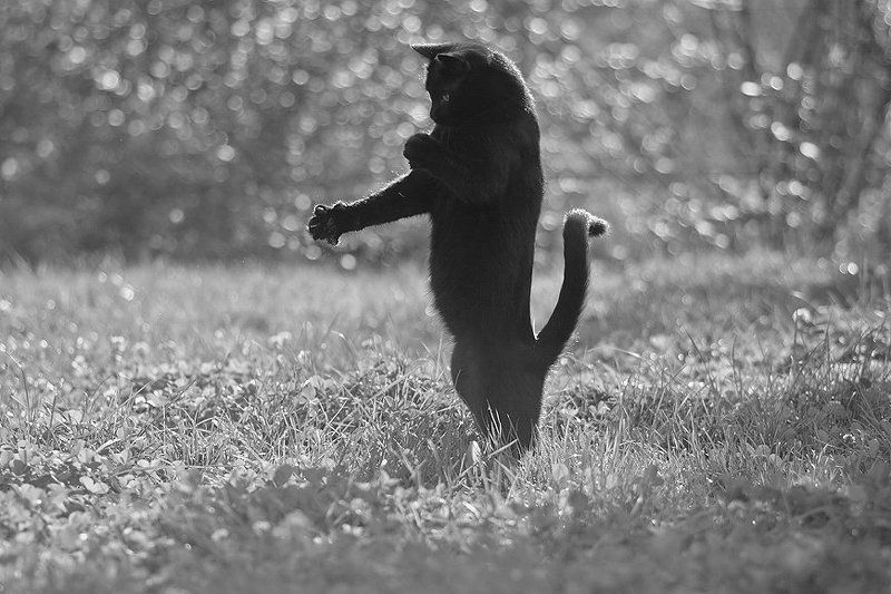 Озорной кот:)photo preview