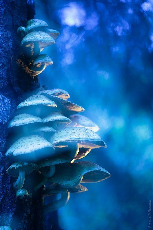 грибы чешуйчатки  Dreamworldphoto preview