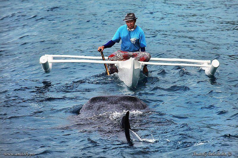 Акула, Анатолий Белощин, Китовая акула, Филиппины Человек и акулаphoto preview
