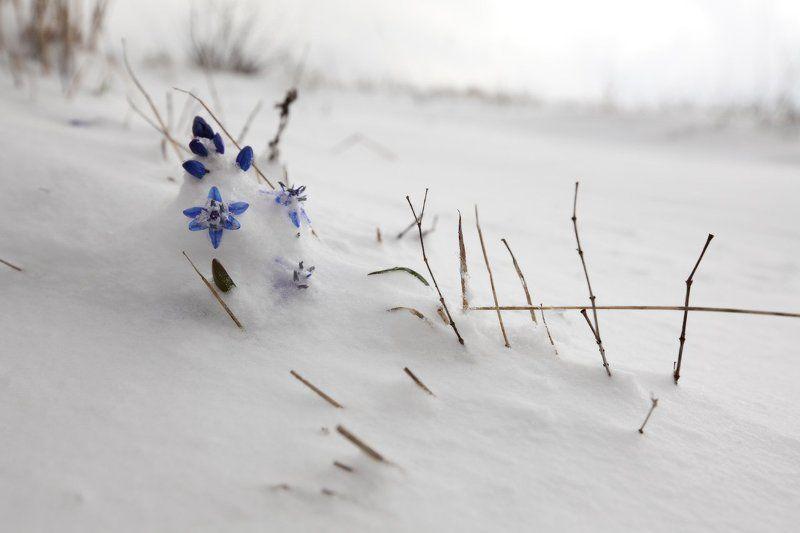 апрель, горы, крым, первоцветы Апрель, Крымphoto preview