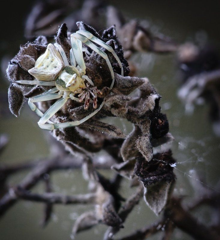 пауки Ужастикиphoto preview