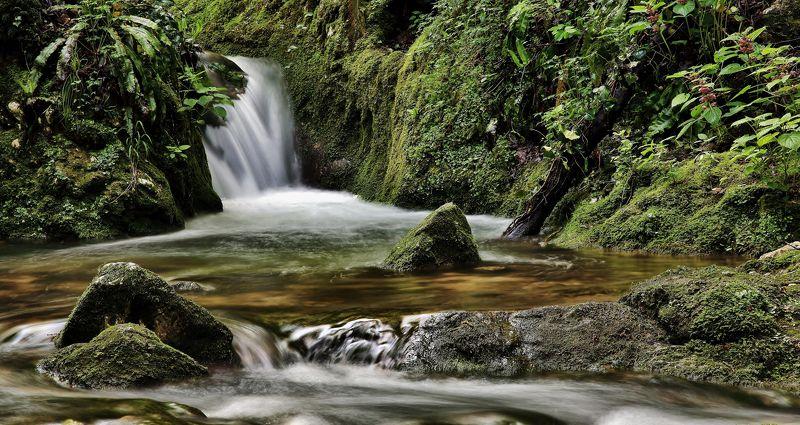 natura,torrente,acqua,muschio,vegetazione Sottoboscophoto preview
