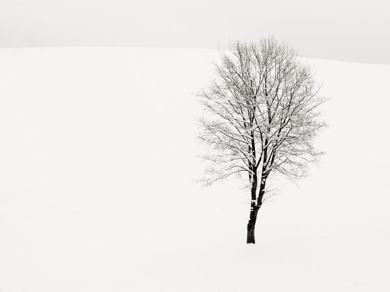 neve,freddo,albero,bianco,luce,riflesso,rami Solitariophoto preview