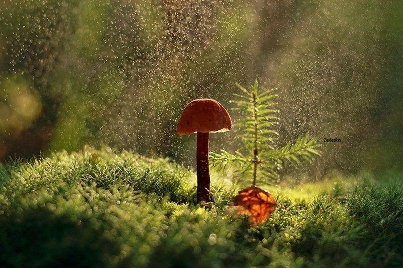 гриб, капли, макро Дождьphoto preview