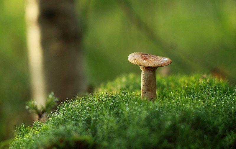 гриб, макро Один на мхуphoto preview