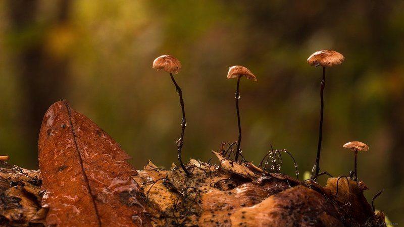 гриб, макро, шишка На шишкеphoto preview