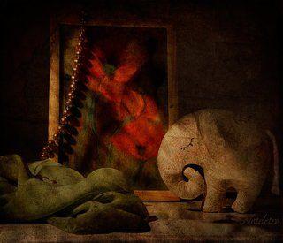 Сон в маковую ночь