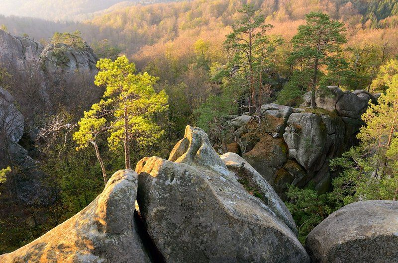 Autumn, Karpaty, Landscape, Mountains, Pine, Rocks, Sunrise, Trees, Ukraine, Восход, Горы, Деревья, Карпаты, Осень, Пейзаж, Скалы, Сосны, Украина photo preview