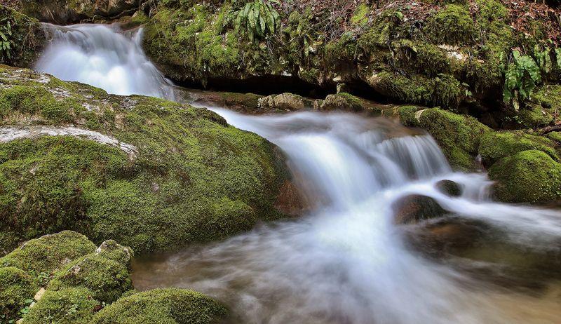 acqua,verde,foglie,movimento, Sottoboscophoto preview