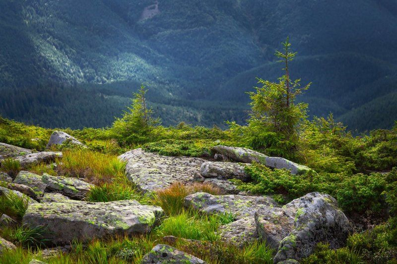 карпаты, carpathians, mountains, ukraine, nature, landscape, stones, trees, green Камниphoto preview