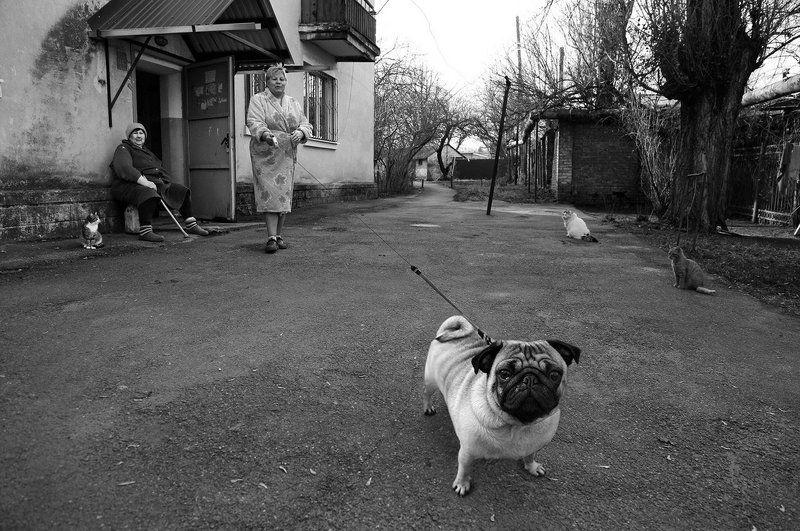Двор, Кошки, Собака *****photo preview