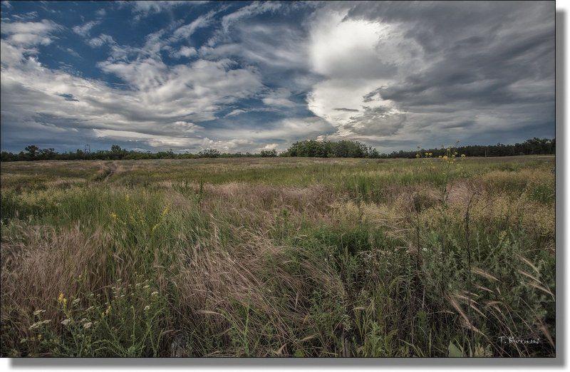 трава, лето Травы, травы, травы...photo preview
