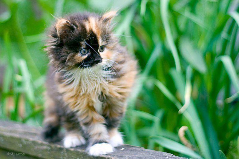 посмотрю-ка  что там....))//ностальгия по котятам//photo preview