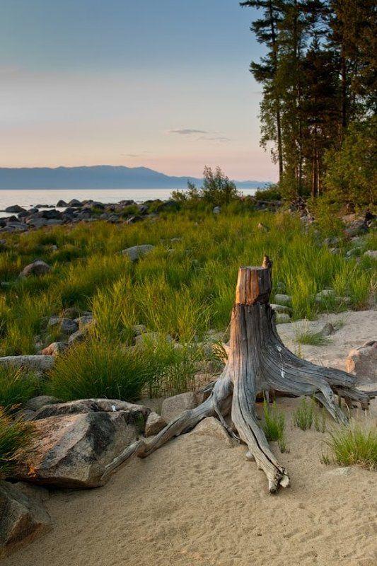бурятия, байкал, максимиха, трава, камни, коряга, вечер photo preview