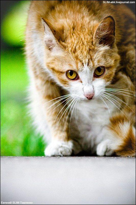 кот, улица, асфальт КОТ#2photo preview