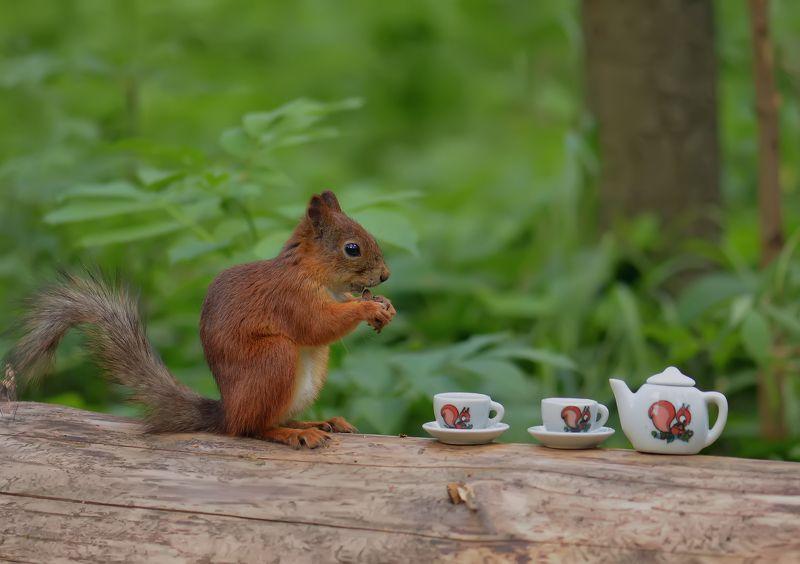 Чаепитие в лесуphoto preview