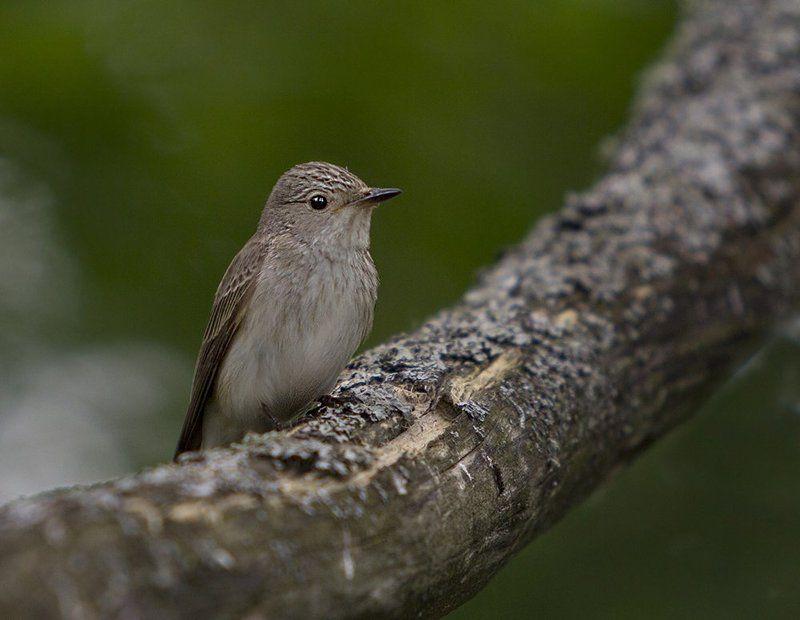 Птичка-невеличкаphoto preview