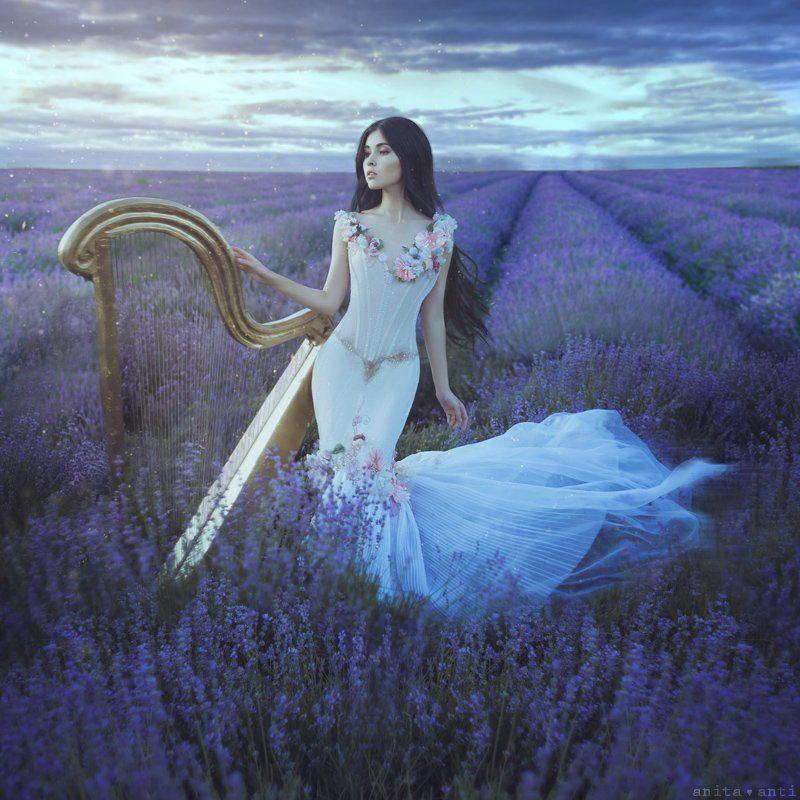 Lavender nocturnephoto preview
