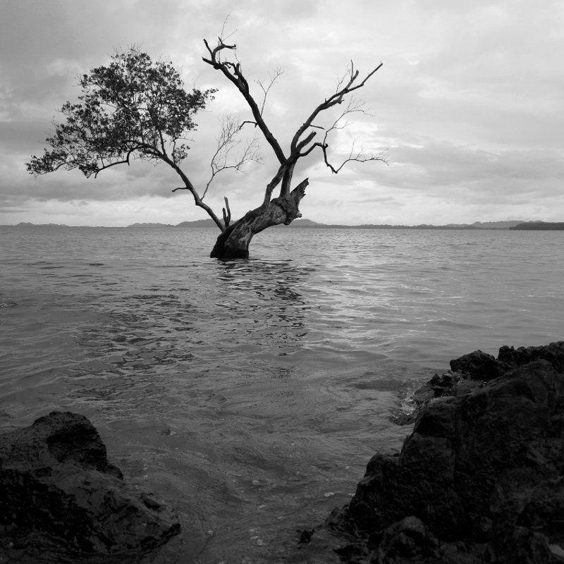 ЧБ, Дерево, Море, Пейзаж, Камни, Азия ***photo preview