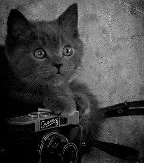 Ко Дню фотографа :)