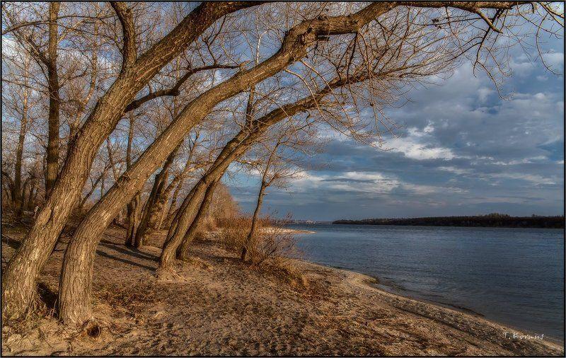 река,деревья,вечер *photo preview