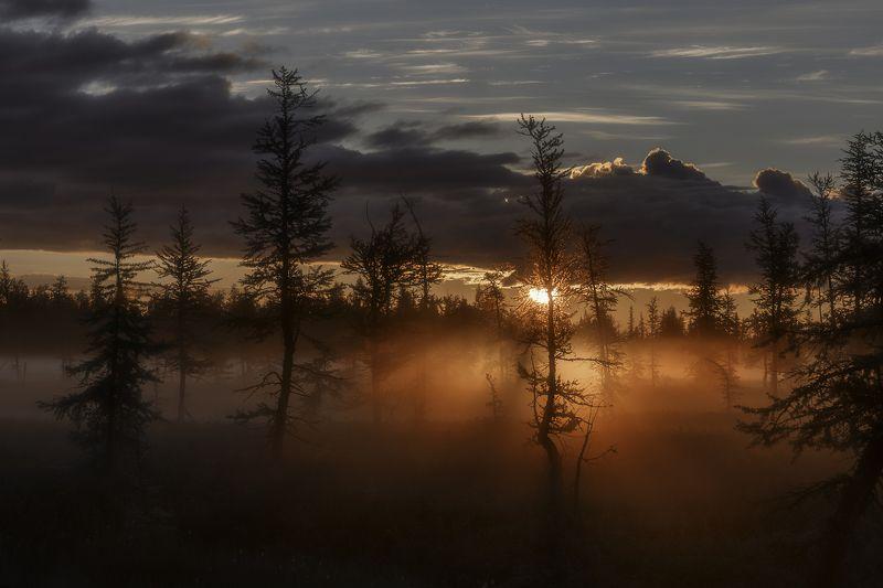 новыйуренгой, уренгой, ямал,  янао, камиль, камильнуреев, россия, рассвет, тундра, лесотундра, туман Рассветный час фото превью