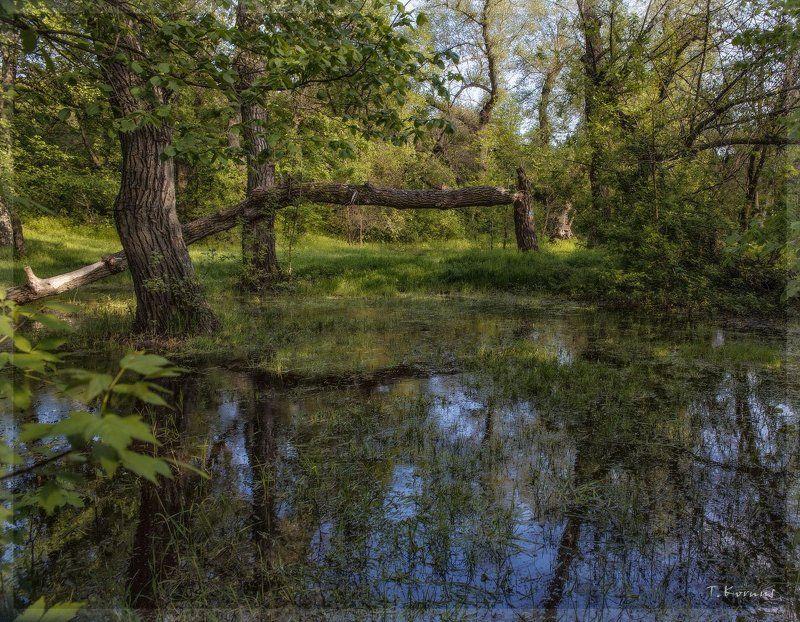 лес,наводнение,весна Весенний лесphoto preview